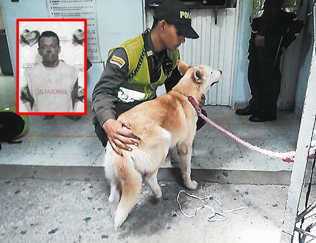 La Policía tiene la orden de proteger a los animales víctimas del maltrato de acuerdo a la ley 1774 del 2016.   Foto: Archivo