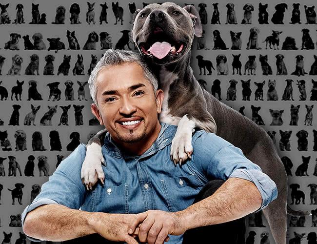 El entrenador mexicano es conocido por rehabilitar a perros con problemas de comportamiento.
