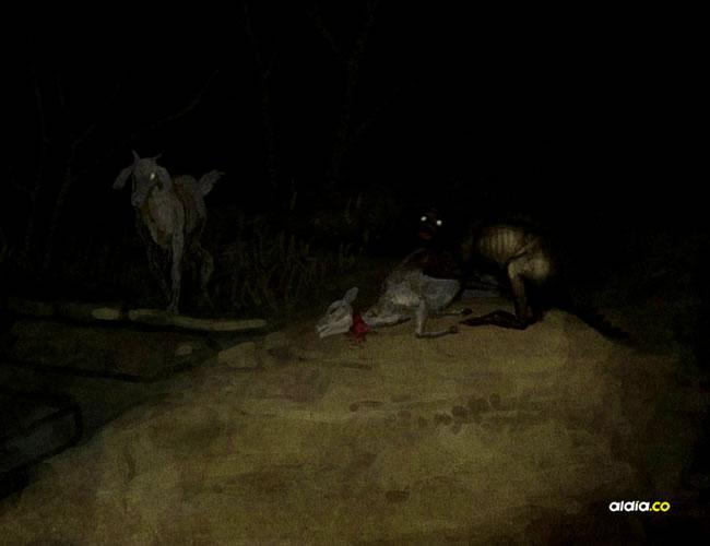 Los campesinos están preocupados con la aparición de una criatura que está acabando con sus animales | Archivo