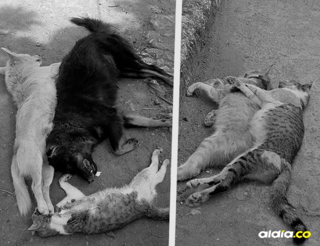 Al parecer, el autor de la matanza es un ciudadano del sector molesto por la presencia de estos animales en la calle | Al Día
