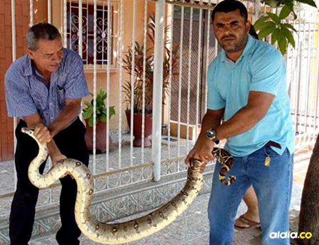 Esta fue la serpiente con la que durmió durante tres noches en su habitación en el municipio de Magangué | AL DÍA