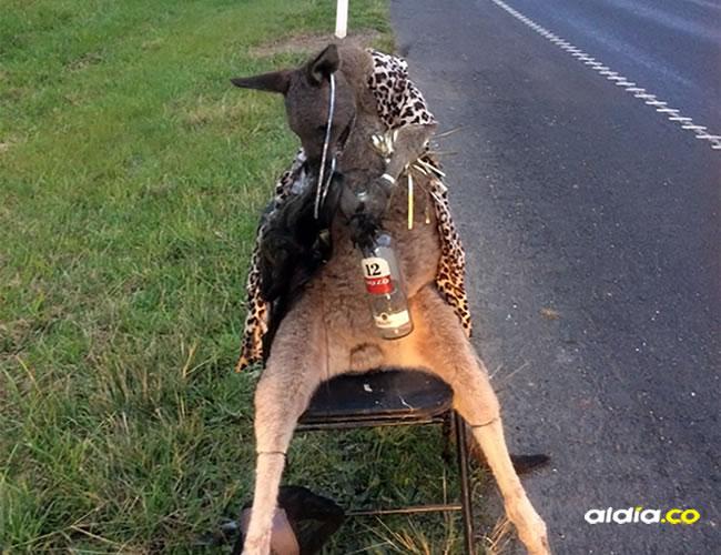 Las autoridades creen que el canguro no fue abatido en el lugar donde fue encontrado | HANDOUT / DEPARTMENT OF ENVIRONMENT, LAND, WATER AND PLANNING / AFP