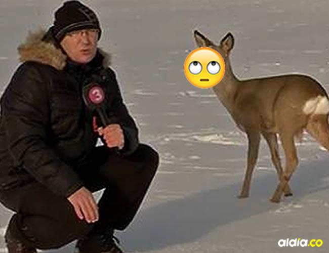 Más allá del chiste, no es la primera vez que le ponen un micrófono a un animal para que dé su versión de los hechos | Verne