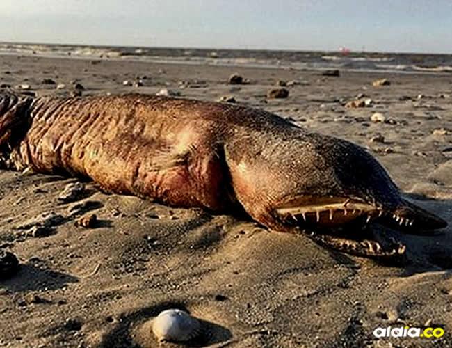 Este tipo de criaturas acuáticas se mantienen ocultas en el mar   Twitter