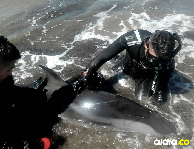 El delfín se encontraba encallado desde las primeras horas de la mañana del martes en Lomita Arena |