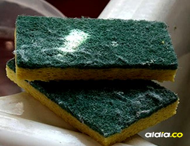 En tan solo un centímetro cúbico de esponja puede haber una cantidad de bacterias igual que en las heces | TE