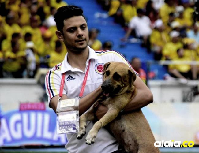 Durante los últimos minutos del primer tiempo entre Colombia y Brasil, un perro se robó el protagonismo al invadir el terreno de juego |  Hansel Vásquez