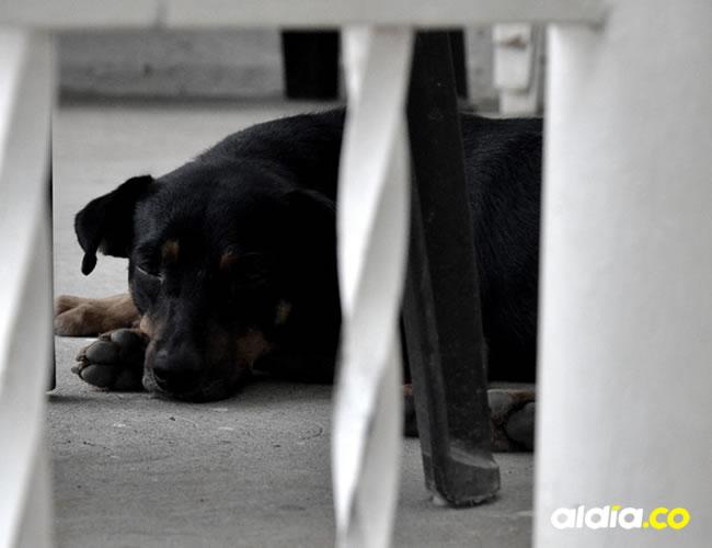 El perro ahora vive en la casa de uno de los vecinos del sector de Blas de Lezo |  Lorena Henríquez