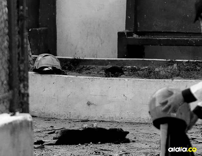 En las fuertes imágenes del suceso se observa a lo lejos a dos perritos que también fueron víctimas de este atroz atentado   EFE