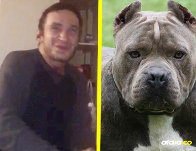 El perro fue sometido a pruebas para determinar las causas del ataque y encontraron que tenía cocaína y morfina en la orina   SWNS.COM, Leinterexpress.com