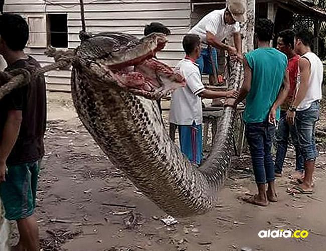 La serpiente fue exhibida en el pueblo donde los habitantes se acercan para conocer al animal | Asiawire, Facebook