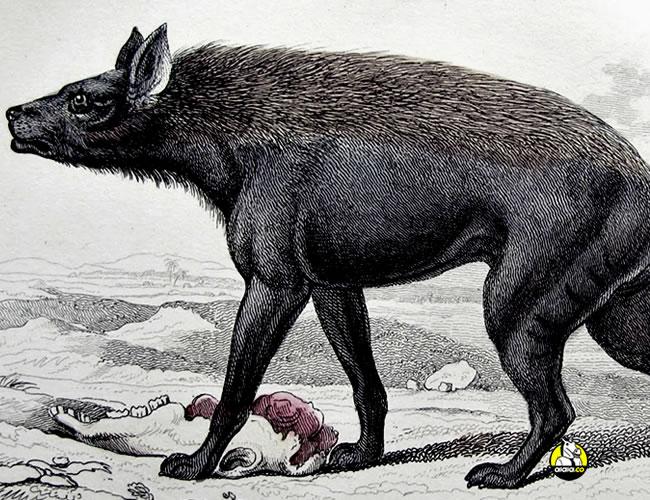 Muchos pueblos han descrito al chupacabras como un animal que vive de la sangre de otros | Wheremonstersdwell