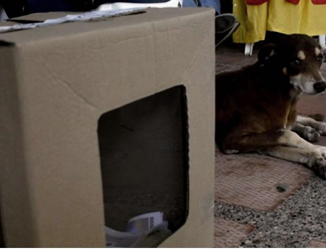 Lucky, el perro guardián de las votaciones del plebiscito en Malambo | Jesús Rico y Christian Mercado