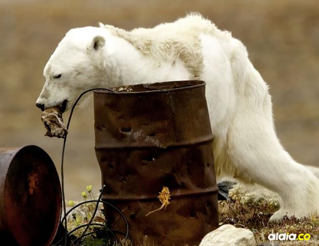 Las tristes imágenes muestran al animalito buscando desesperadamente la comida en tanques de basura | Instagram