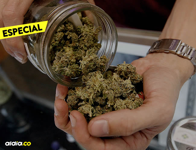La ley que despenalizó y aprobó el consumo de marihuana en el país charrúa consta de unos 100 artículos   Ilustrativa
