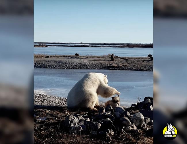 Los experto aseguran que este comportamiento no es natural y que no debemos dejar de ver a los depredadores como tal | Captura de video