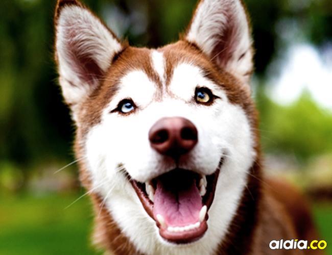 Los perritos también tienen su género de música preferido | Cortesía
