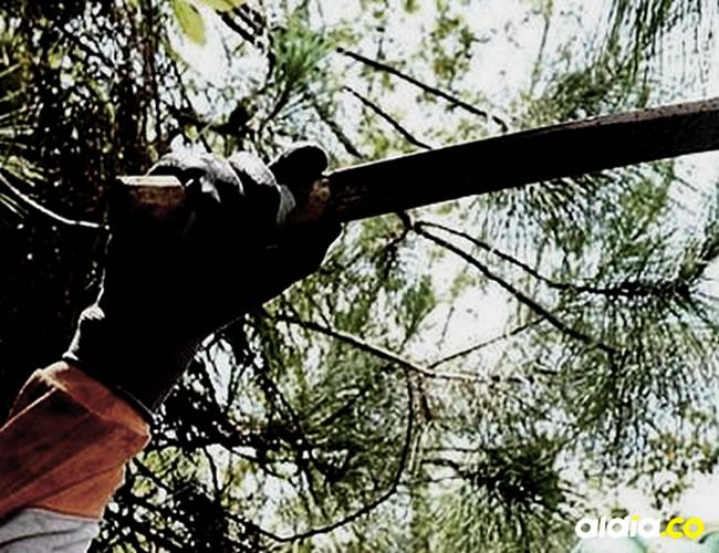 Con el machete, alias el negro casi le quita un brazo al dueño de la casa   Archivo
