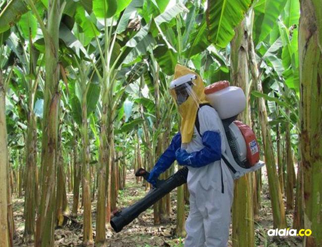 El uso indiscriminado de químicos, inciden en la propagación de plagas.