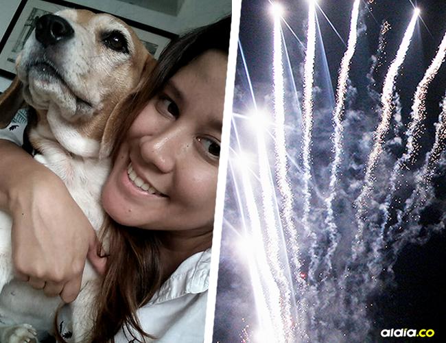 Milú, la beagle de cinco años que murió el 25 de diciembre debido a los fuegos artificiales en Cartagena, Bolívar.   AL DÍA