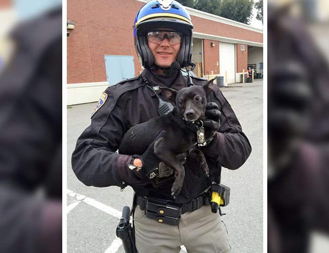 El Oficial G. Pumphrey  sostiene al Chihuahua después de que lo capturaran. | Foto: AP