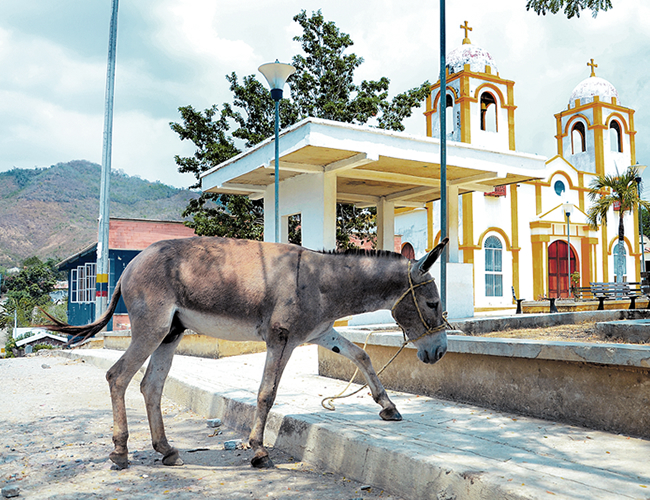 La matanza ilegal de burros crea un problema sanitario, pues los restos son abandonados en el monte sin el más mínimo tratamiento. | Archivo