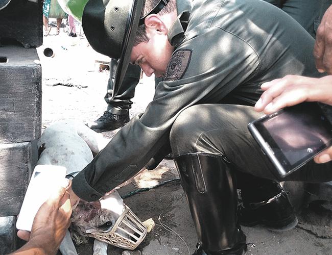 Momento en que un veterinario de la Policía de Carabineros cura la herida de bala en la oreja derecha del perro 'Tyson'. | Foto: Archivo