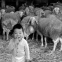 Datos impresionantes sobre la ley de hijo único en China