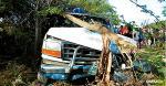 La camioneta se detuvo al chocar contra el árbol de trupillo   AL DÍA