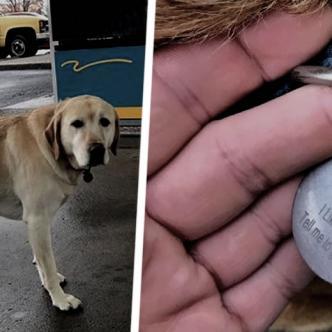 El animal disfruta de sus paseos por la ciudad mientras conoce personas nuevas | ALDÍA.CO