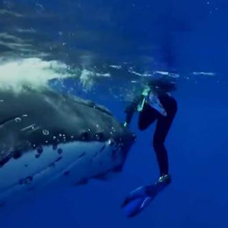 Nan Hauser, la bióloga que estaba buceando junto con su equipo en las aguas de Muri Beach   Captura de pantalla