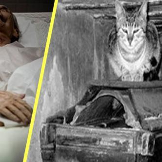 Los asistentes aseguran que el cadáver desapareció, mientras que los gatos muertos que iban en el ataúd revivieron.