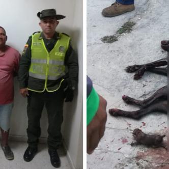 Esmely Hostia Márquez fue detenido después de asesinar a puñal a una perra en Santa Marta.