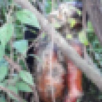 Estaba colgado de un árbol, con una cuerda atada al cuello.