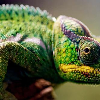 Existen diferencias entre animales exóticos y de fauna silvestre | Cortesía