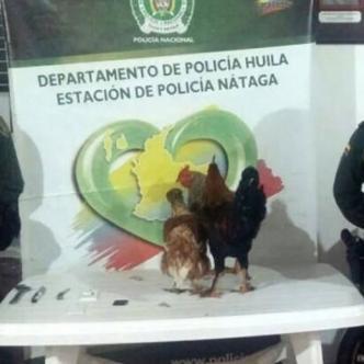 Habrían capturado este viernes 10 de noviembre a un menor de edad por robarse una gallina, un gallo y un pollo | Policía de Huila