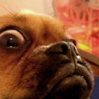 Los perros respiran cinco veces por segundo, lo que los ayuda a entender su alrededor | Cortesía
