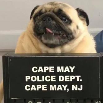 Tomada de: Facebook Cape May Police Department.