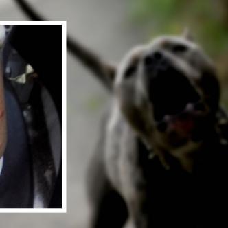 Así quedó la herida que le causó el perro de raza pitbull a la niña en su espalda. | AL DÍA