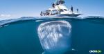 Esta especie suele permanecer en la profundidad del mar | Al Día