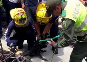 Con ayuda de una grúa, bomberos y policías rescatan a un perrito atrapado bajo una rejilla de desagüe | Captura de pantalla