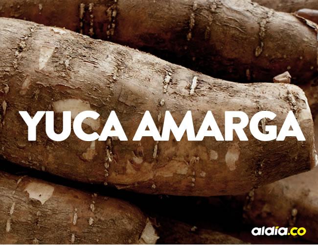 La yuca amarga se parece mucho a la dulce y por eso muchas personas se confunden al consumirla | ALDÍA.CO