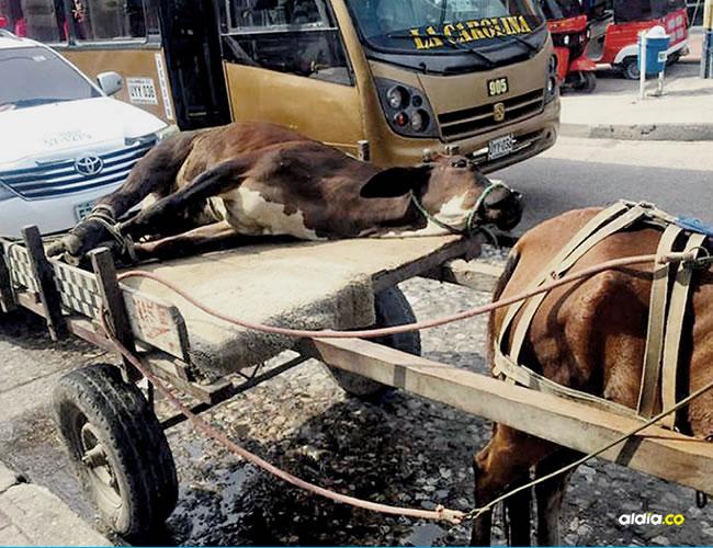 La indignación de los lugareños ante la cruel imagen permitió que los individuos no continuaran su camino | Al Día